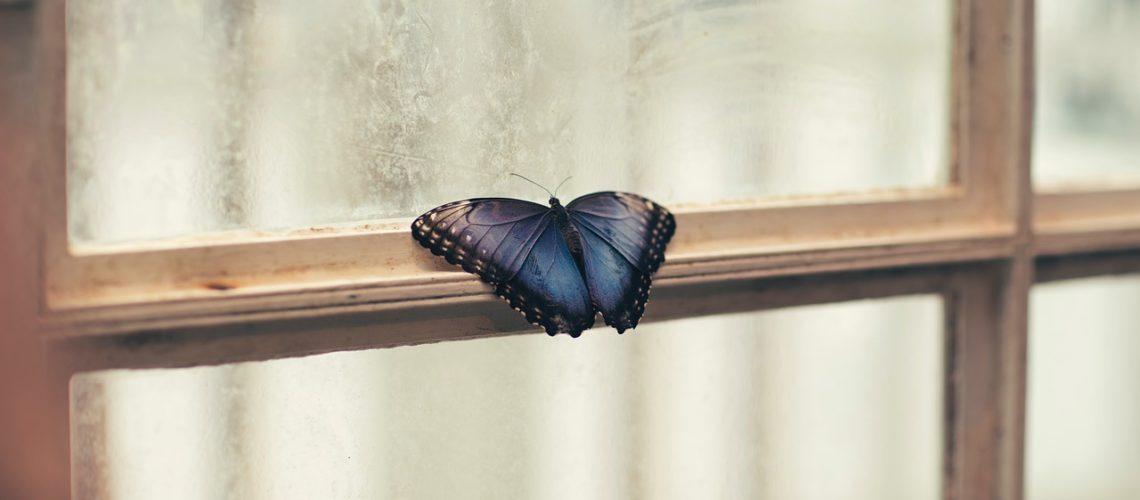 window-2561993_1280